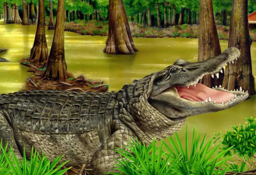 Alligator Mangrove Swamp