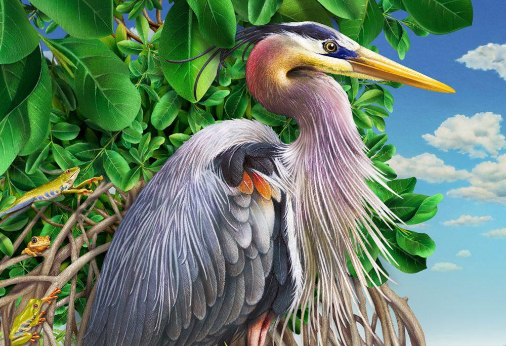 Blue Heron Mangroves